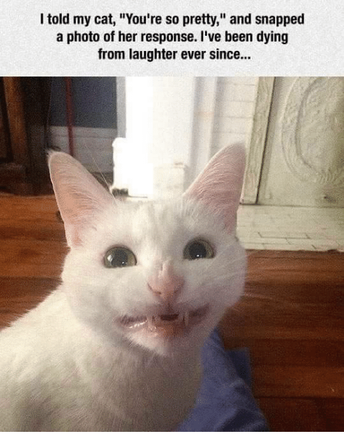 """Your So Pretty: I told my cat, """"You're so pretty,"""" and snapped  a photo of her response. I've been dying  from laughter ever since..."""