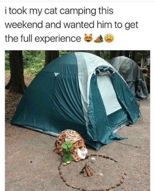 Experience, Cat, and Weekend: i took my cat camping this  weekend and wanted him to get  the full experience