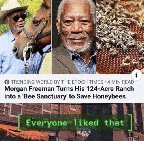Morgan Freeman, World, and Epoch: i  TRENDING WORLD BY THE EPOCH TIMES 4 MIN READ  Morgan Freeman Turns His 124-Acre Ranch  into a 'Bee Sanctuary' to Save Honeybees  Everyone liked that