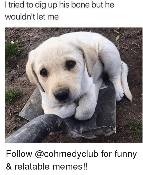 Funny, Memes, and Relatable: I tried to dig up his bone but he  wouldn't let me Follow @cohmedyclub for funny & relatable memes!!