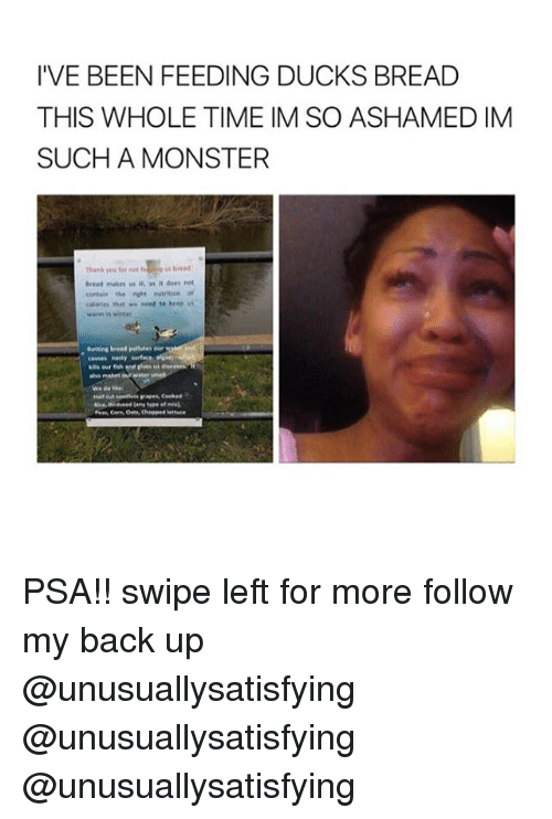 Monster, Winter, and Ducks: I VE BEEN FEEDING DUCKS BREAD  THIS WHOLE TIME IM SO ASHAMED IM  SUCH A MONSTER  aread mars a, it does not  contain the nvtition or  kalaries that we need to keep  warm in winter  she makes water PSA!! swipe left for more follow my back up @unusuallysatisfying @unusuallysatisfying @unusuallysatisfying