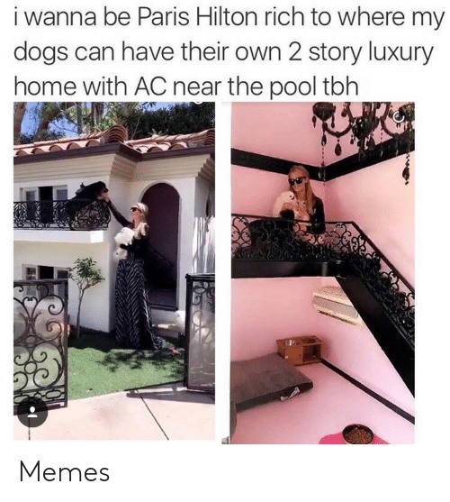 Dogs, Memes, and Paris Hilton: i wanna be Paris Hilton rich to where my  dogs can have their own 2 story luxury  home with AC near the pool tbh Memes