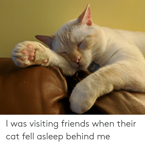 Friends, Cat, and Asleep: I was visiting friends when their cat fell asleep behind me