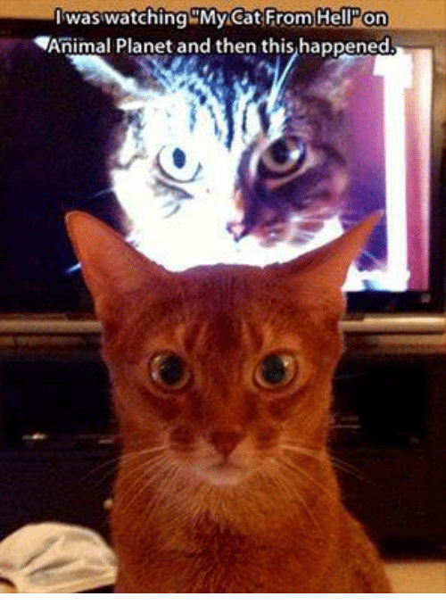 Animeds: I was watching My Cat From Hell on  Animal Planet and then this happened.
