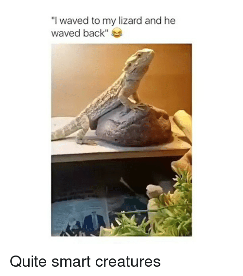 """Memes, Quite, and Back: """"I waved to my lizard and he  waved back"""" Quite smart creatures"""