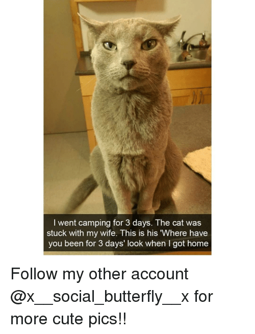Cute, Memes, and Butterfly: I went camping for 3 days. The cat was  stuck with my wife. This is his Where have  you been for 3 days' look when I got home Follow my other account @x__social_butterfly__x for more cute pics!!