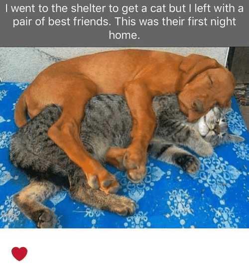 Dank, Friends, and Best: I went to the shelter to get a cat but I left witha  pair of best friends. This was their first night  home ❤️