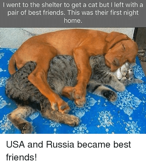 Friends, Best, and Home: I went to the shelter to get a cat but I left with a  pair of best friends. This was their first night  home USA and Russia became best friends!