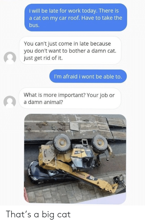 Be Late: i will be late for work today. There is  a cat on my car roof. Have to take the  bus.  You can't just come in late because  you don't want to bother a damn cat.  just get rid of it.  I'm afraid i wont be able to.  What is more important? Your job or  a damn animal?  CAT That's a big cat