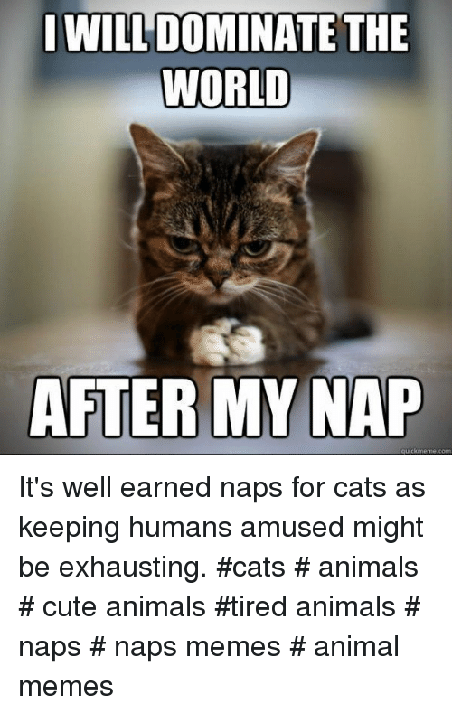 Animals, Cats, and Cute: I WILL DOMINATE THE  WORLD  AFTER MY NAP It's well earned naps for cats as keeping humans amused might be exhausting. #cats # animals # cute animals #tired animals # naps # naps memes # animal memes