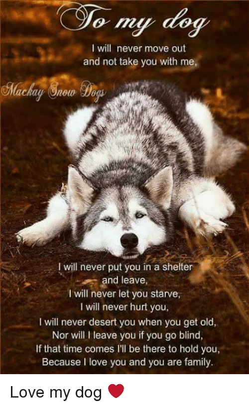 Dogs, Family, and Love: I will never move out  and not take you with me,  will never put you in a shelter  and leave,  will never let you starve,  will never hurt you,  l will never desert you when you get old,  Nor will I leave you if you go blind,  If that time comes l'll be there to hold your  Because I love you and you are family. Love my dog ❤️