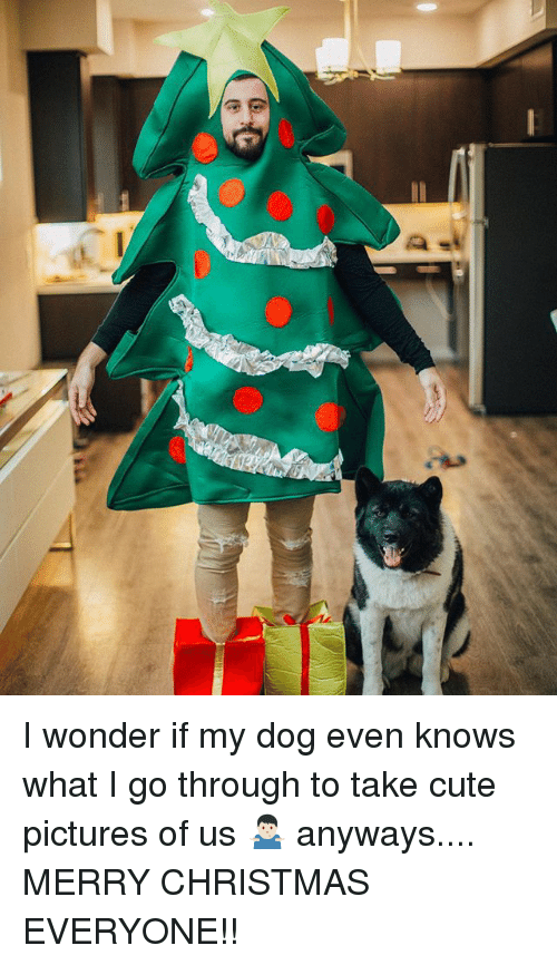 Christmas, Cute, and Memes: I wonder if my dog even knows what I go through to take cute pictures of us 🤷🏻♂️ anyways.... MERRY CHRISTMAS EVERYONE!!