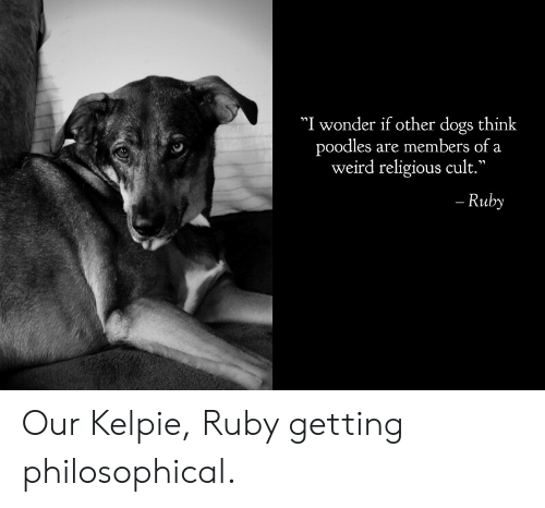 """Dogs, Weird, and Wonder: """"I wonder if other dogs think  poodles are members of a  weird religious cult.""""  - Ruby Our Kelpie, Ruby getting philosophical."""