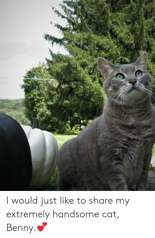 Cat, Share, and Handsome: I would just like to share my extremely handsome cat, Benny.💕