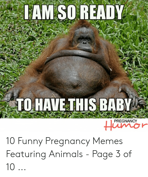 Animals, Funny, and Memes: IAM SO READY  TO HAVETHIS BABY  PREGNANCY  Humor 10 Funny Pregnancy Memes Featuring Animals - Page 3 of 10 ...