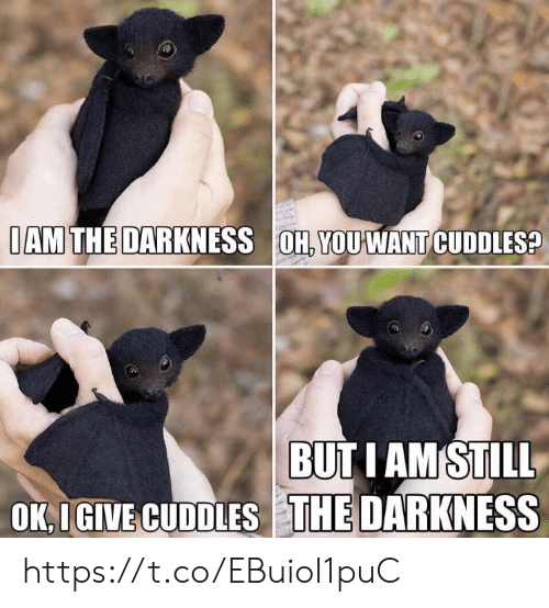 Memes, 🤖, and The Darkness: IAM THE DARKNESS OH, YOU WANT CUDDLES?  BUTI AMSTILL  OK,IGIVE CUDDLES THE DARKNESS https://t.co/EBuioI1puC