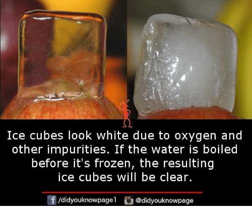Frozen, Memes, and Oxygen: Ice cubes look white due to oxygen and  other impurities. If the water is boiled  before it's frozen, the resulting  ice cubes will be clear.  団/d.dyouknowpagel  G@didyouknowpage
