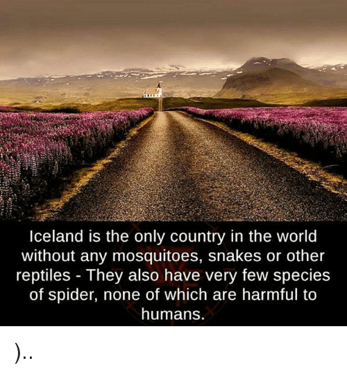 Spider, Iceland, and Snakes: Iceland is the only country in the world  without any mosquitoes, snakes or other  reptiles They also have very few species  of spider, none of which are harmful to  humans. )..