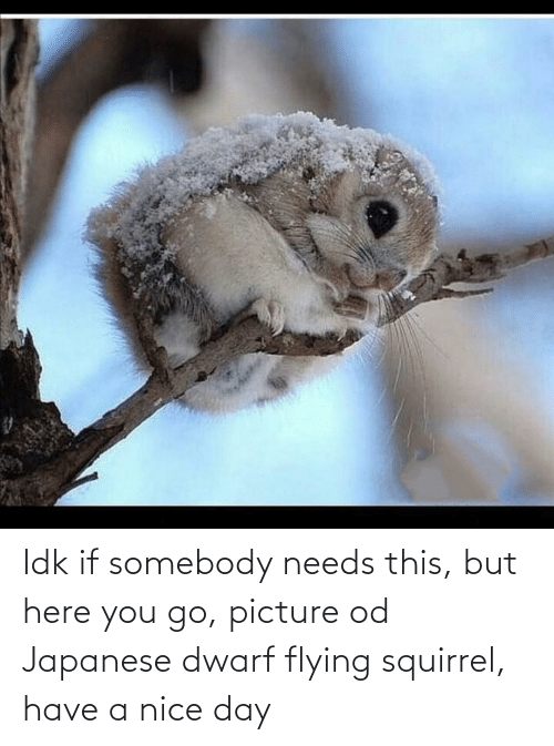 Nice: Idk if somebody needs this, but here you go, picture od Japanese dwarf flying squirrel, have a nice day
