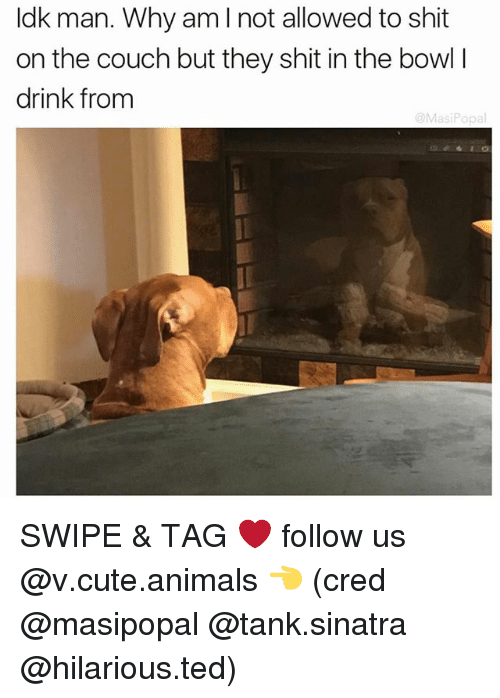 Popa: Idk man. Why am I not allowed to shit  on the couch but they shit in the bowl l  drink from  @Masi Popa SWIPE & TAG ❤️ follow us @v.cute.animals 👈 (cred @masipopal @tank.sinatra @hilarious.ted)