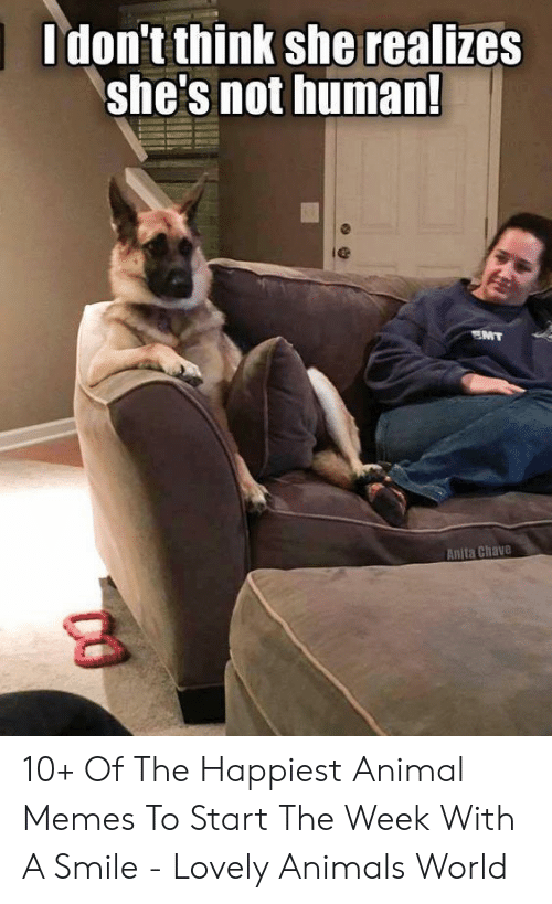 Animals, Memes, and Animal: Idon't think she realizes  she's not human!  le  Anita Chave 10+ Of The Happiest Animal Memes To Start The Week With A Smile - Lovely Animals World