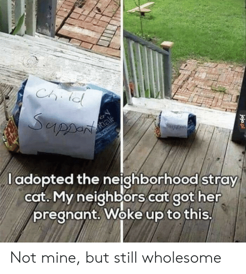 Pregnant, Neighbors, and Wholesome: Iel  l adopted the neighborhood stray  cot. My neighbors cat got her  pregnant. Woke up to this Not mine, but still wholesome