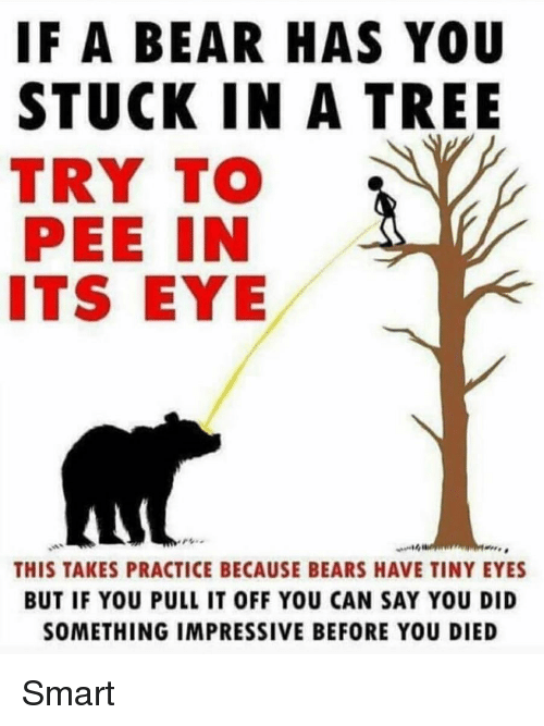 Memes, Bear, and Bears: IF A BEAR HAS YOU  STUCK IN A TREE  TRY TO  PEE IN  ITS EYE  rぃ.  THIS TAKES PRACTICE BECAUSE BEARS HAVE TINY EYES  BUT IF YOU PULL IT OFF YOU CAN SAY YOU DID  SOMETHING IMPRESSIVE BEFORE YOU DIED Smart