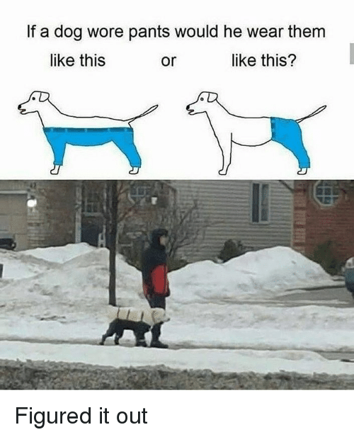 Dank Memes, Dog, and Them: If a dog wore pants would he wear them  like this  or  like this? Figured it out