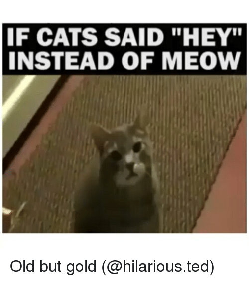 "Cats, Funny, and Ted: IF CATS SAID ""HEY""  INSTEAD OF MEOW Old but gold (@hilarious.ted)"