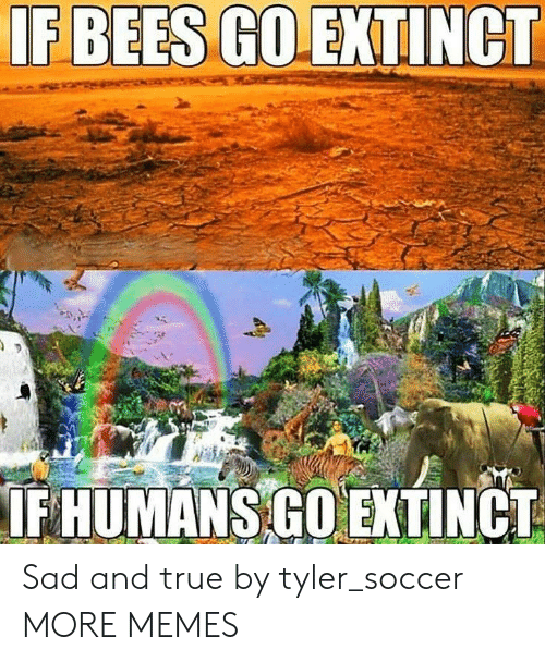 Dank, Memes, and Soccer: IF HUMANS GOEKTINCT Sad and true by tyler_soccer MORE MEMES