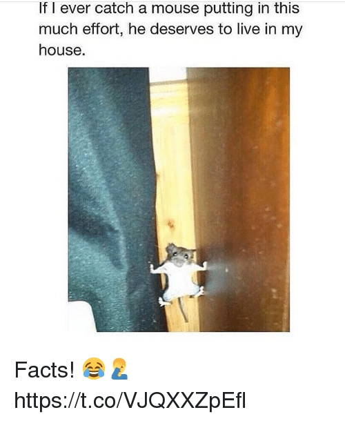Facts, My House, and House: If l ever catch a mouse putting in this  much efort, he deserves to live in my  house. Facts! 😂🤦‍♂️ https://t.co/VJQXXZpEfl