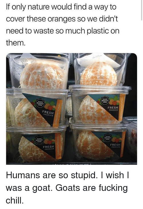 Chill, Fresh, and Fucking: If only nature would find a way to  cover these oranges so we didn't  need to waste so much plastic on  them.  RIGHT  RIGHT  FRESH2  PRODUCE  FRESHZ  PRODUC  RIGHT  RIGHT  FRESH  FRESH  PRODUCE Humans are so stupid. I wish I was a goat. Goats are fucking chill.