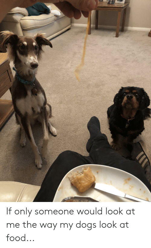 Dogs, Food, and Look: If only someone would look at me the way my dogs look at food...