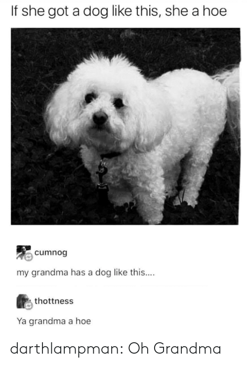 Grandma, Hoe, and Tumblr: If she got a dog like this, she a hoe  cumnog  my grandma has a dog like this....  thottness  Ya grandma a hoe darthlampman:  Oh Grandma