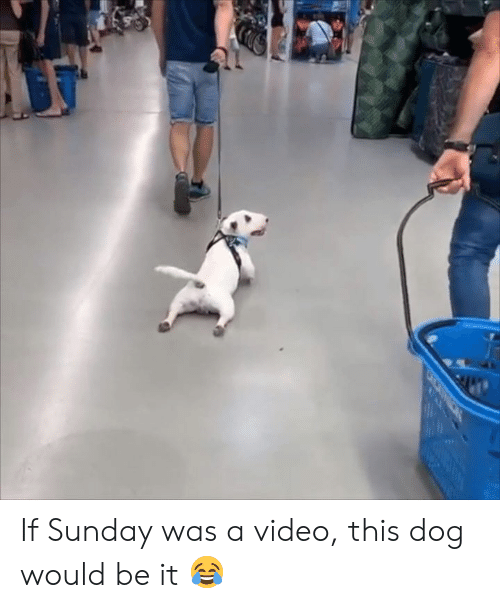 Video, Sunday, and Dog: If Sunday was a video, this dog would be it 😂