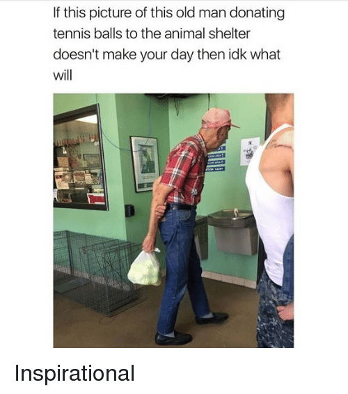 Memes, Old Man, and Animal: If this picture of this old man donating  tennis balls to the animal shelter  doesn't make your day then idk what  will Inspirational