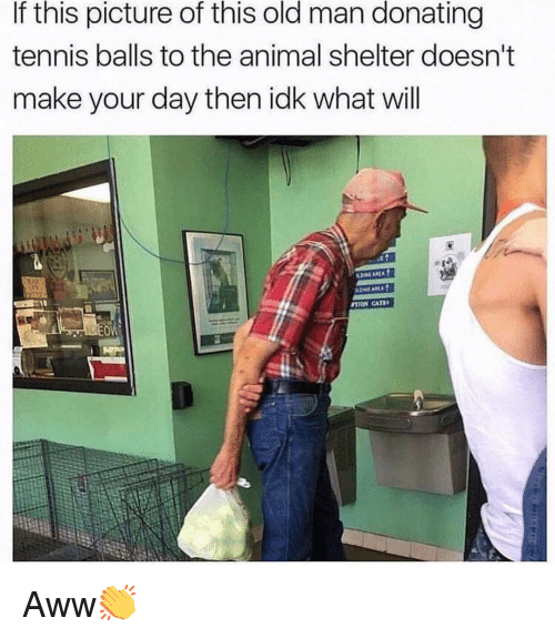Aww, Cats, and Memes: If this picture of this old man donating  tennis balls to the animal shelter doesn't  make your day then idk what will  TION CATS Aww👏
