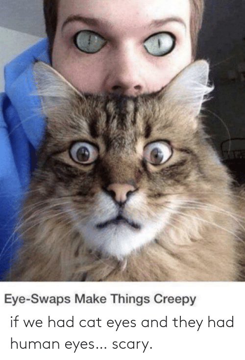 human: if we had cat eyes and they had human eyes… scary.