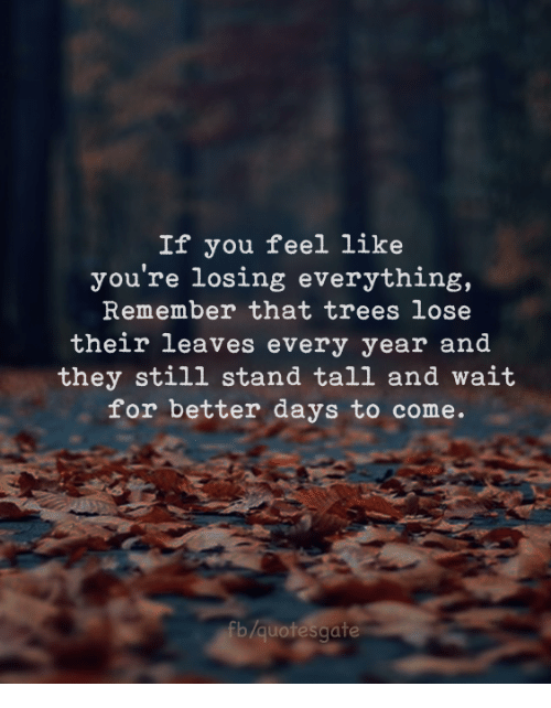 Trees, Remember, and They: If you feel like  you're losing everything,  Remember that trees lose  their leaves every year and  they still stand tall and wait  for better days to come.  fb/quotesgate