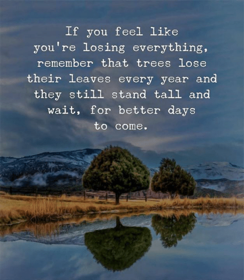 Trees, Remember, and They: If you feel Like  you're losing everything,  remember that trees lose  their leaves every year and  they still stand tall and  wait, for better days  to come.
