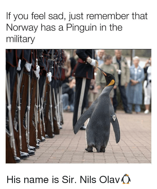 Norway, Military, and Sad: If you feel sad, just remember that  Norway has a Pinguin in the  military His name is Sir. Nils Olav🐧