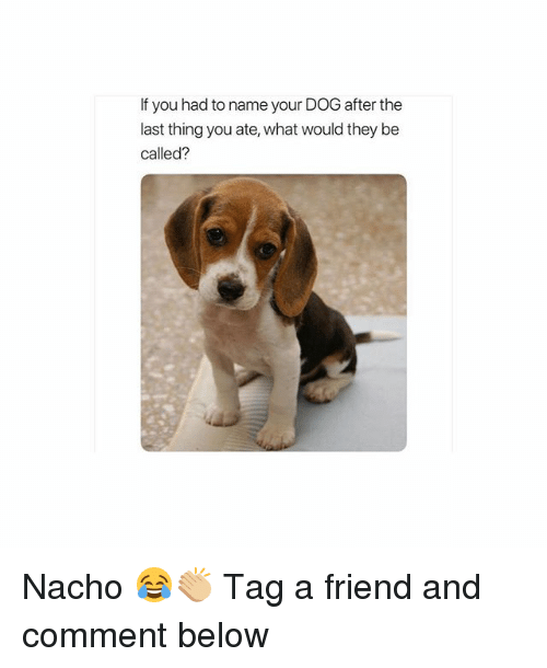 Girl, Dog, and Friend: If you had to name your DOG after the  last thing you ate, what would they be  called? Nacho 😂👏🏼 Tag a friend and comment below