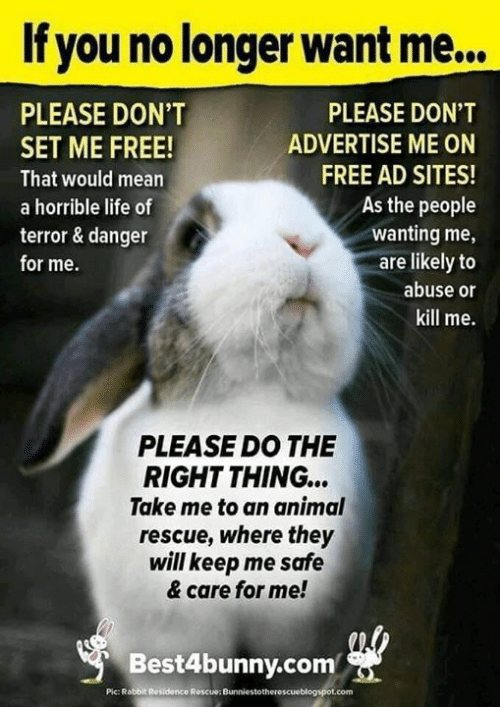 Life, Memes, and Animal: If you no longer want me...  PLEASE DON'T  PLEASE DON'T  ADVERTISE ME ON  SET ME FREE!  FREE AD SITES!  That would mean  As the people  a horrible life of  wanting me,  are likely to  terror & danger  for me.  abuse or  kill me.  PLEASE DO THE  RIGHT THING...  Take me to an animal  rescue, where they  will keep me safe  & care for me!  Best4bunny.com  Pic: Rabbit Residence Roscue: Bunniestotherescueblogspot.com