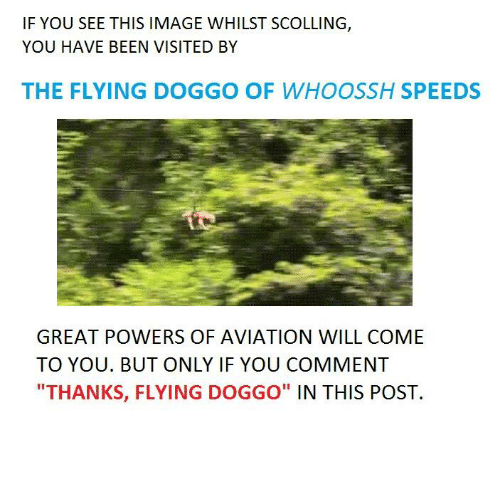 "Image, Images, and Power: IF YOU SEE THIS IMAGE WHILST SCOLLING  YOU HAVE BEEN VISITED BY  THE FLYING DOGGO OF WHOOSSH SPEEDS  GREAT POWERS OF AVIATION WILL COME  TO YOU. BUT ONLY IF YOU COMMENT  ""THANKS, FLYING DOGGO"" IN THIS POST"