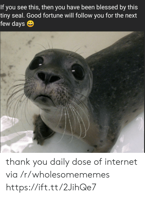 Blessed, Internet, and Thank You: If you see this, then you have been blessed by this  tiny seal. Good fortune will follow you for the next  few days thank you daily dose of internet via /r/wholesomememes https://ift.tt/2JihQe7
