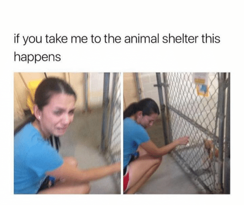 Memes, Animal, and Animal Shelter: if you take me to the animal shelter this  happens