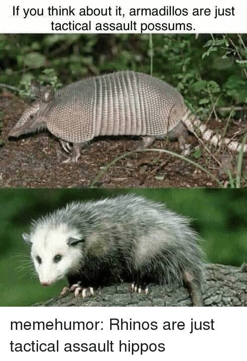 Tumblr, Blog, and Http: If you think about it, armadillos are just  tactical assault possums memehumor:  Rhinos are just tactical assault hippos