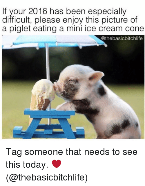 piglets: If your 2016 has been especially  difficult, please enjoy this picture of  a piglet eating a mini ice cream cone  Cathebasicbitchlife Tag someone that needs to see this today. ❤️ (@thebasicbitchlife)