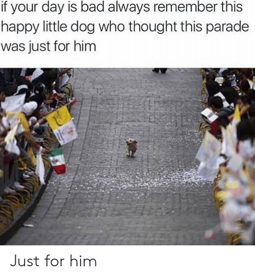 Bad, Happy, and Thought: if your day is bad always remember this  happy little dog who thought this parade  was just for him Just for him