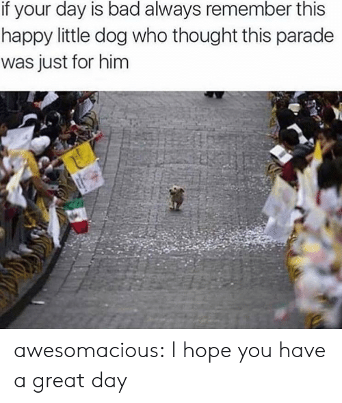 Bad, Tumblr, and Blog: if your day is bad always remember this  happy little dog who thought this parade  was just for him awesomacious:  I hope you have a great day